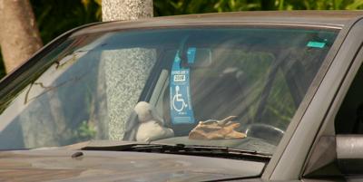 Handi-man's handicapped permit