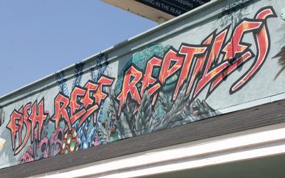 Fish Reef Reptiles