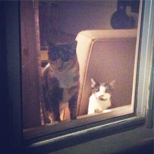 Meatshake and Heisenberg waiting patiently.