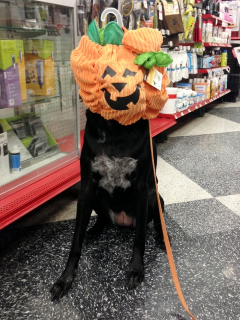 Mr. Fabulous is clearly less excited about Halloween than I am.