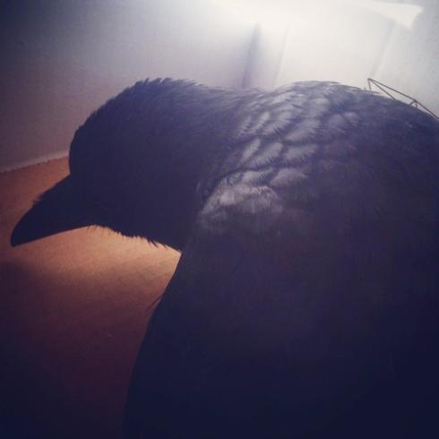 Edgar the Crow: ? - September 25th, 2014