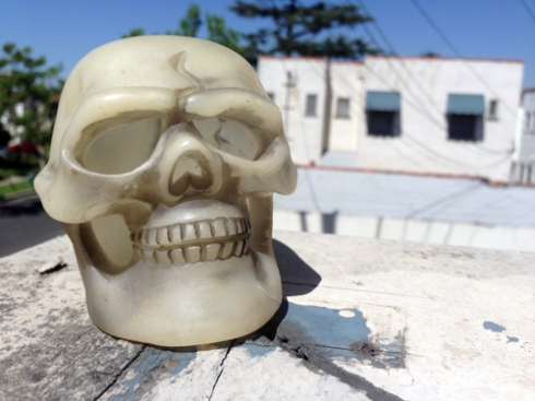 FOUND: ONE HUMAN SKULL!