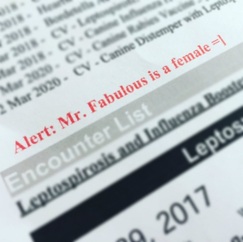 ALERT! MR. FABULOUS IS A FEMALE!
